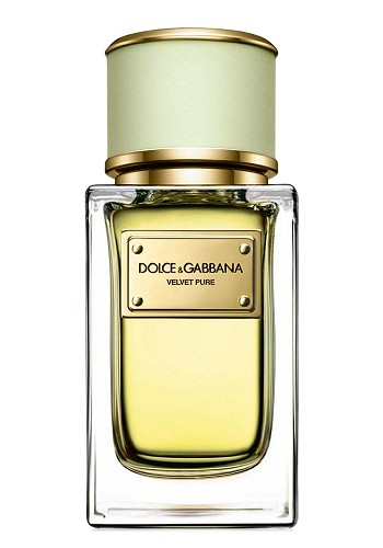 Velvet Pure perfume for Women by Dolce & Gabbana