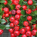 red berry fruit